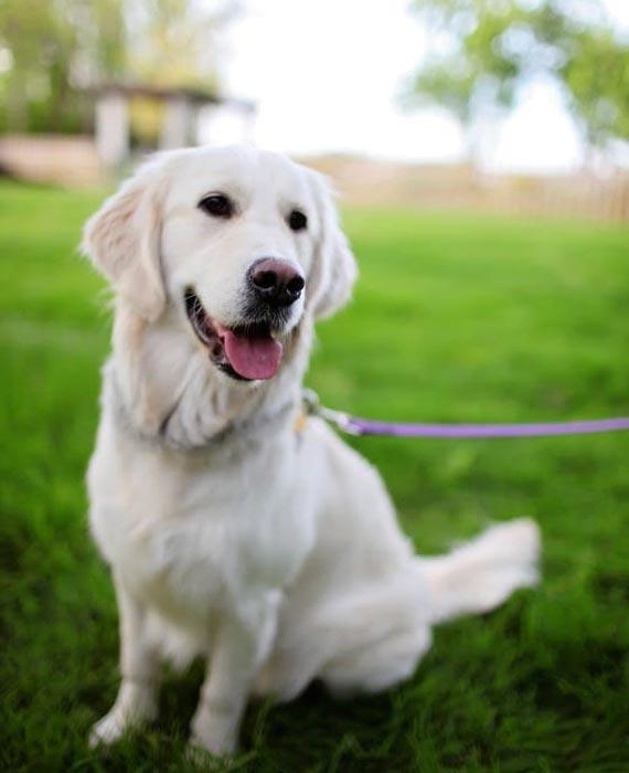 Dog Walking Chelsea